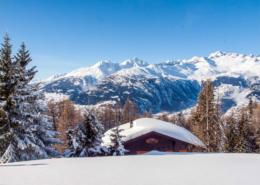Ahorn Rosswald im Winter