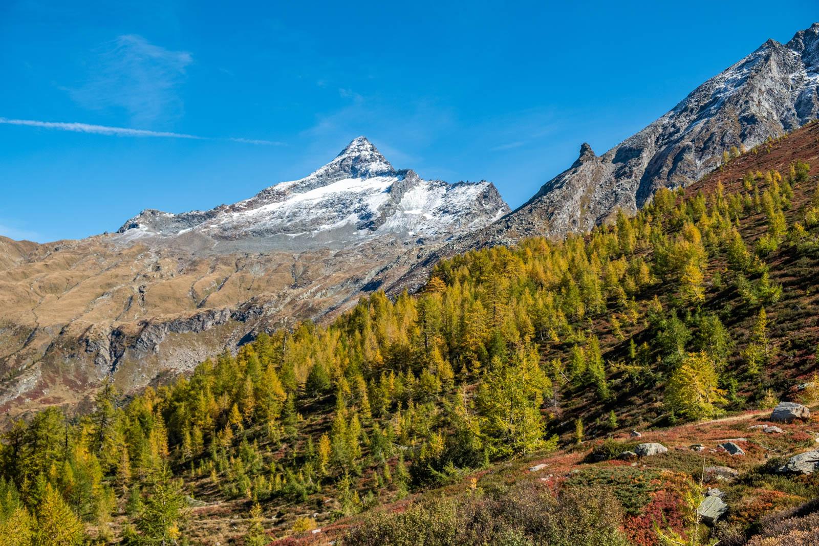 Titelbild Foto Ausstellung Bortelhorn in Herbstfarben